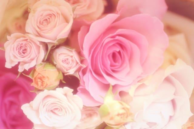 元気が出るバラの花言葉