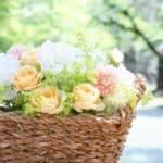【誕生花と花言葉】絶対に覚えておきたい各月ごとのお花をご紹介